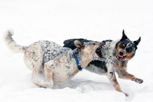 Ralph's dogs