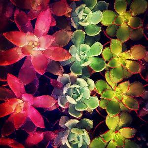 terrarium-joy-stclaire (1)