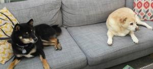 Iko and Luna