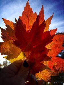 alison leaves
