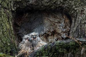 christopher b owlets