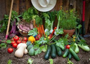 400 garden